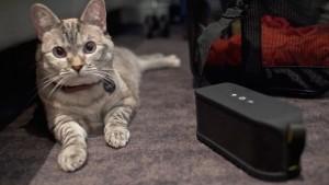 Musica gatos_2