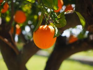 Sunzest Fruits, la empresa que reinventa la forma de vender fruta