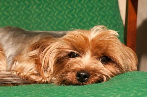 Ahora Puedes Conocer el Estado de Ánimo de tu Perro con Tailtalk