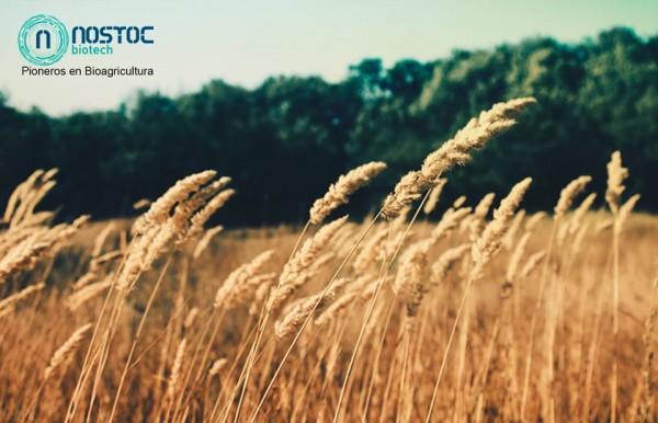 Nostoc Biotech Innovando la Agricultura Tradicional en La Bolsa Social