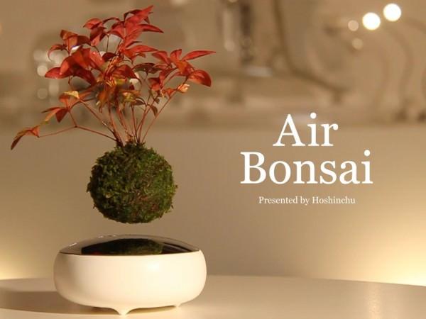 Con Air Bonsai Cultiva tu Propia Estrella y Pídele un Deseo