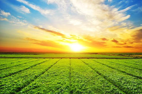 2017: un año importante para el sector agroalimentario