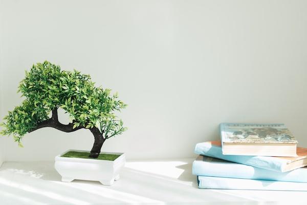 Las plantas y su significado para tu hogar u oficina