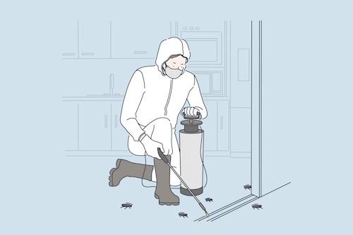Cómo controlar las plagas de insectos de la madera