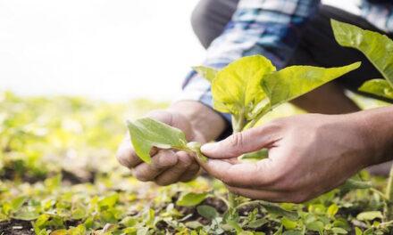 Ventajas del abono orgánico